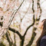 sakura_schoolgirl