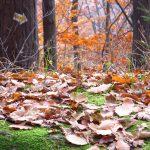 foliage-1003301_640